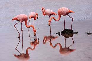 Flamingos, Fietse, Schmuggler und Co. –Grenzenloses Radvergnügen in der Grafschaft