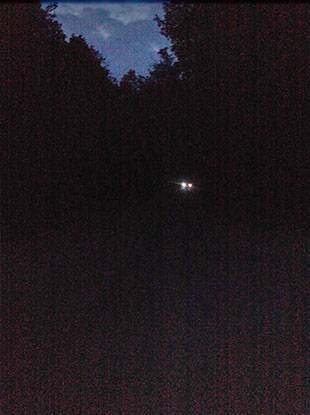 Foto 2: NAchtfoto - Die Glühwürmchentour - Nachtschwärmerei der etwas anderen Art