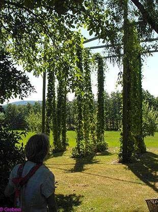 Foto 3: Radreise-Gartentraumtour, grüne Landschaft mit Bäumen, Sonne, Mensch im Vordergrund