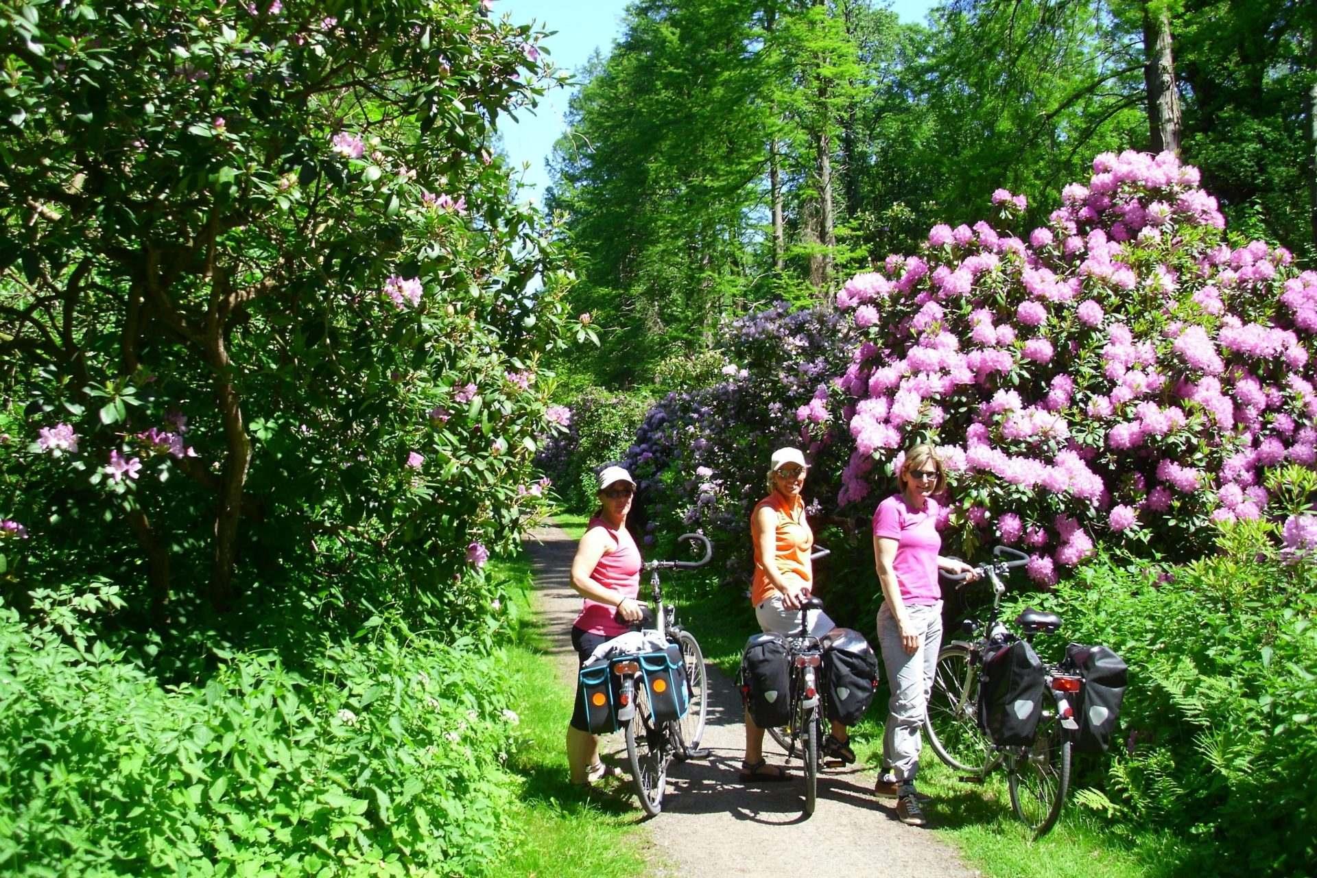 Foto1: Radreise-Gartentraumtour, Grün, Fahrräder, Rhododondren